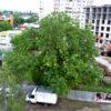 Спасите дерево. Оно пока живое…