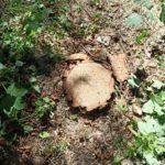 Вокруг кисловодских деревьев разгорелись очередные страсти