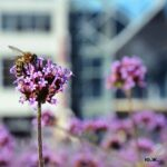 Волшебный мир бабочек колибри (Кисловодск 2020)