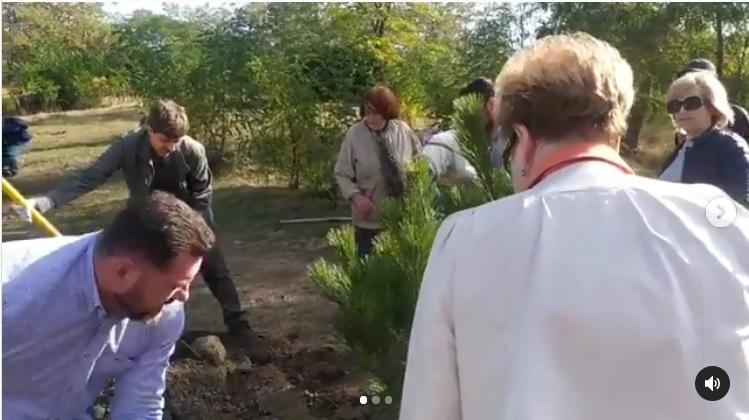 Тридцать сосен высадили общественные экологи и депутаты Кисловодска на мемориале Воинской Славы