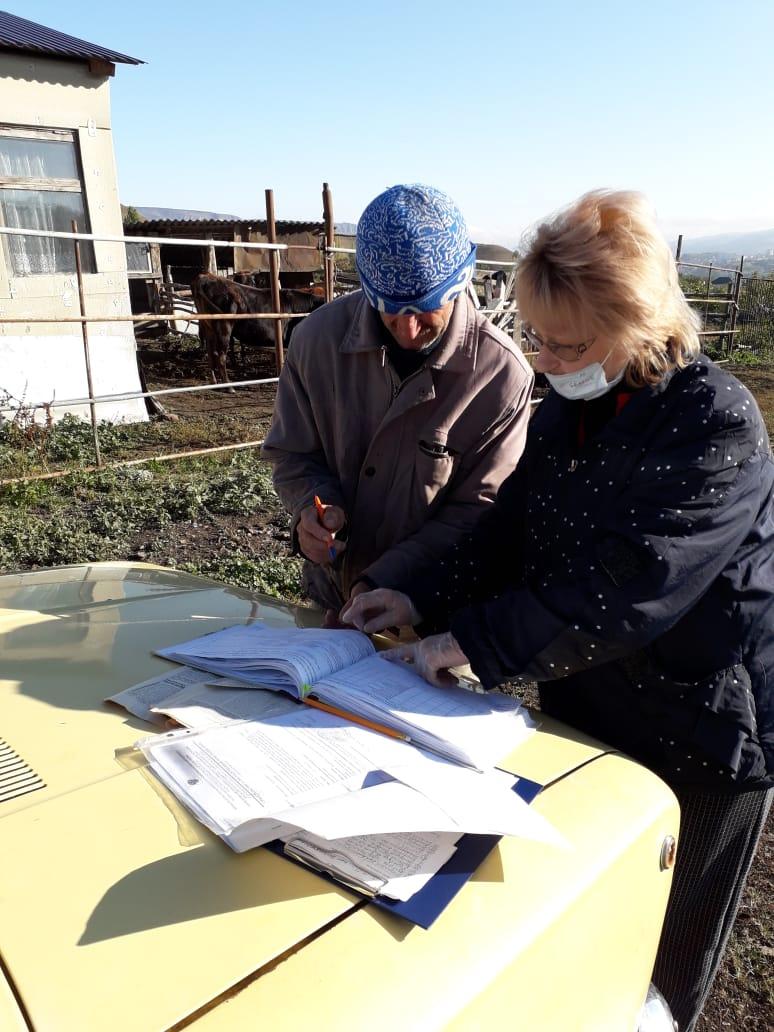 Рогатый скот в поселках Кисловодского городского округа берут под контроль