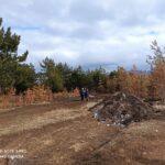 Экологическое преступление в Кисловодске: кто виноват и что делать?