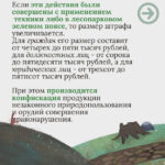 Закон на защите лесных насаждений. Дело за пониманием и совестью