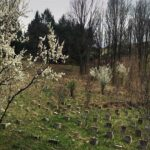 Весна на Старом озере