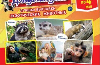 В Доме культуры курорта в Кисловодске проходит выставка экзотических животных