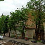 Неравная борьба за жизнь. В курортной зоне Кисловодска несколько лет убивают здоровую акацию