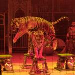 Не пропустите! Впервые на кисловодской арене – великолепный «Королевский цирк Гии Эрадзе»!