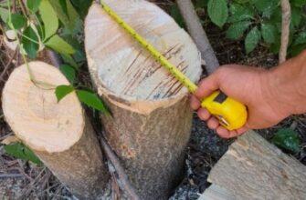 В Пятигорске незаконно спилены 86 деревьев . Виновники устанавливаются