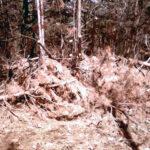 Приведут ли в порядок кисловодские леса?