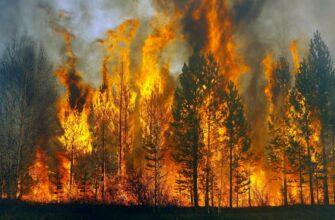 Вернут ли охрану лесов в России на федеральный уровень?