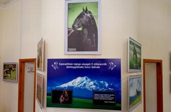 В Кисловодском музее «Крепость» - кавказские лошади Ольги Бабенко